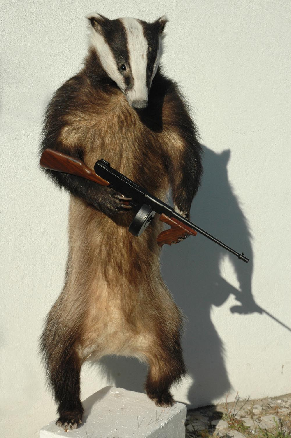Plunge Productions Taxidermy Badger