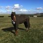 Tweed suit horse