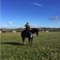 cheltenham tweed suit horse