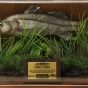 RNLI TAXIDERMY FISH