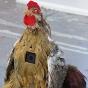 Go pro chicken.jpg