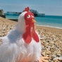 flug-chicken-on-beach