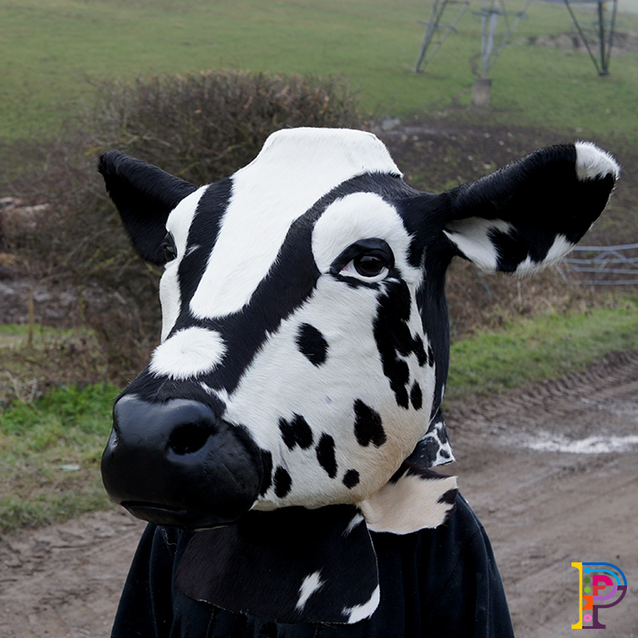 Cow Head props for promotional tour